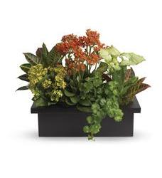 Stylish Plant Assortment (T106-3A)