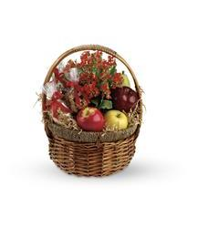 Health Nut Basket (T108-2A)