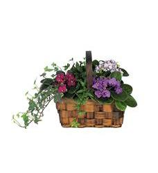 Mixed African Violet Basket (TF128-2)