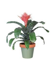 Tropical Bromeliad (TF142-3)