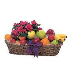 Plant and Fruit Basket (TF157-2)