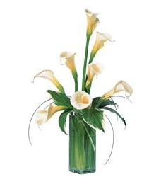 White Callas (TF25-1)