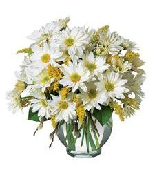Daisy Cheer (TF58-3)