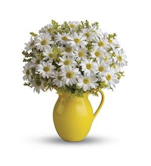 Teleflora's Sunny Day Pitcher of Daisies (T139-1A)