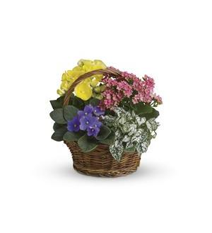 Spring Has Sprung Mixed Basket (T93-1A)
