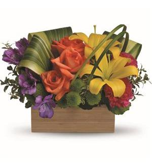Teleflora's Shades Of Brilliance Bouquet (TEV32-3A)