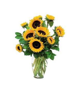 Shining Sunflowers (TF66-1)